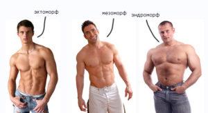 типы телосложения анатомия