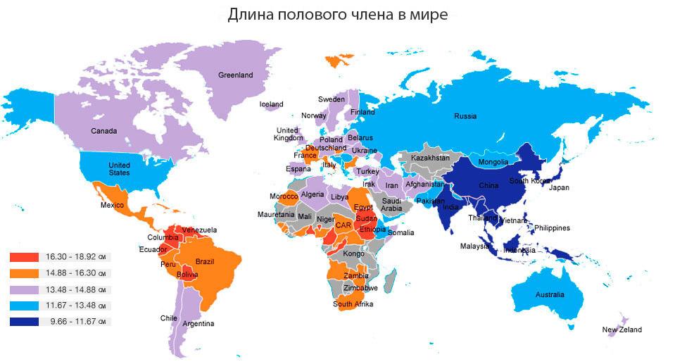 размеры половых членов в россии