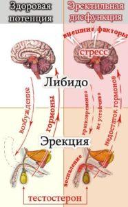 лекарства от импотенции у мужчин