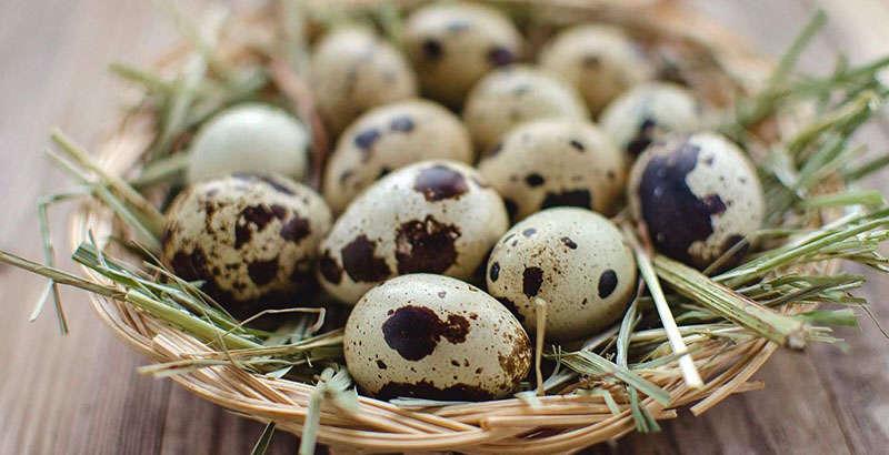 Перепелинные яица