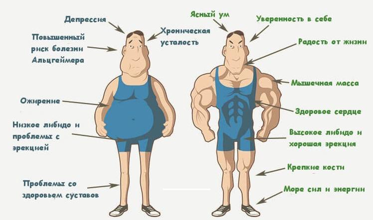 Преимущества высокого уровня тестостерона в мужском организме