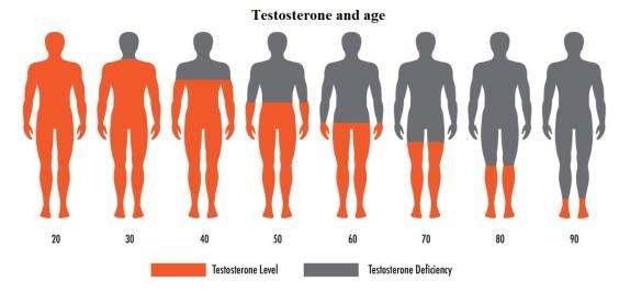 Выработка тестостерона человеком в разном возрасте