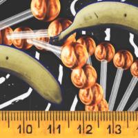 Можно ли определить длину члена без замеров?